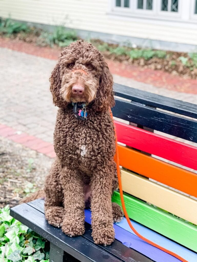 dog sitting on multi colored pride bench
