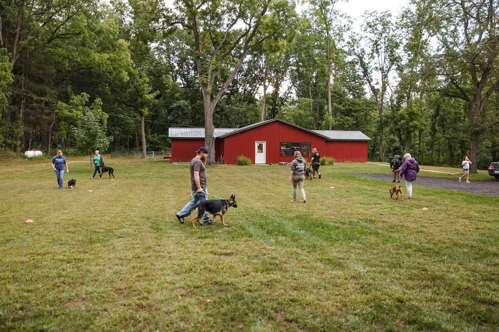 walkmore session group dog training